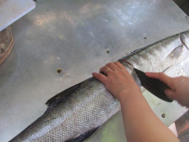 Cá nhồng cỡ lớn