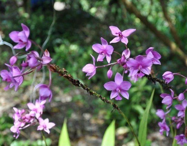 Hệ thực vật ở Vườn Quốc gia