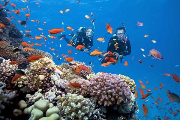 Các loài sinh vật biển của vườn Quốc gia