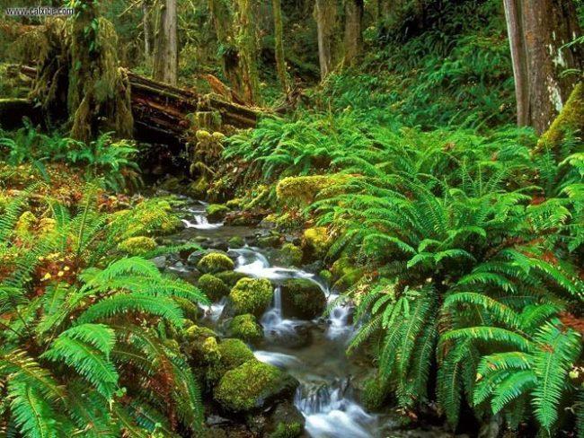 Khám phá rừng quốc gia Phú Quốc
