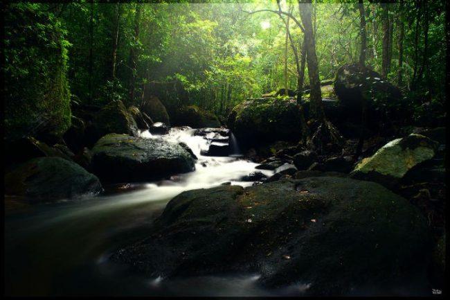 Dòng suối dưới tán rừng tối