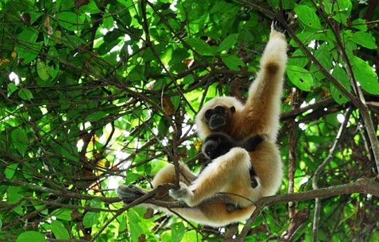 Hệ động vật ở Vườn Quốc gia