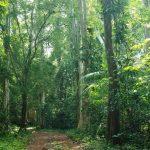 Vườn quốc gia Phú Quốc – Điểm du lịch không nên bỏ qua