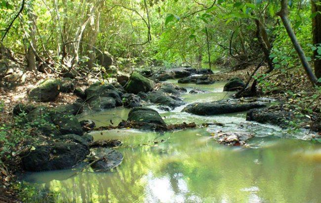 Khu rừng già nguyên sinh của vườn quốc gia