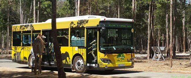 Xe chuyên dụng trong Safari Phú Quốc