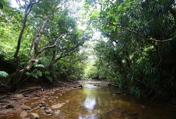 Vẻ đẹp hoang sơ của Suối Tiên Phú Quốc
